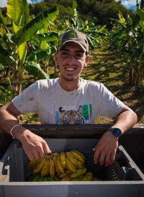 Producteur bananes